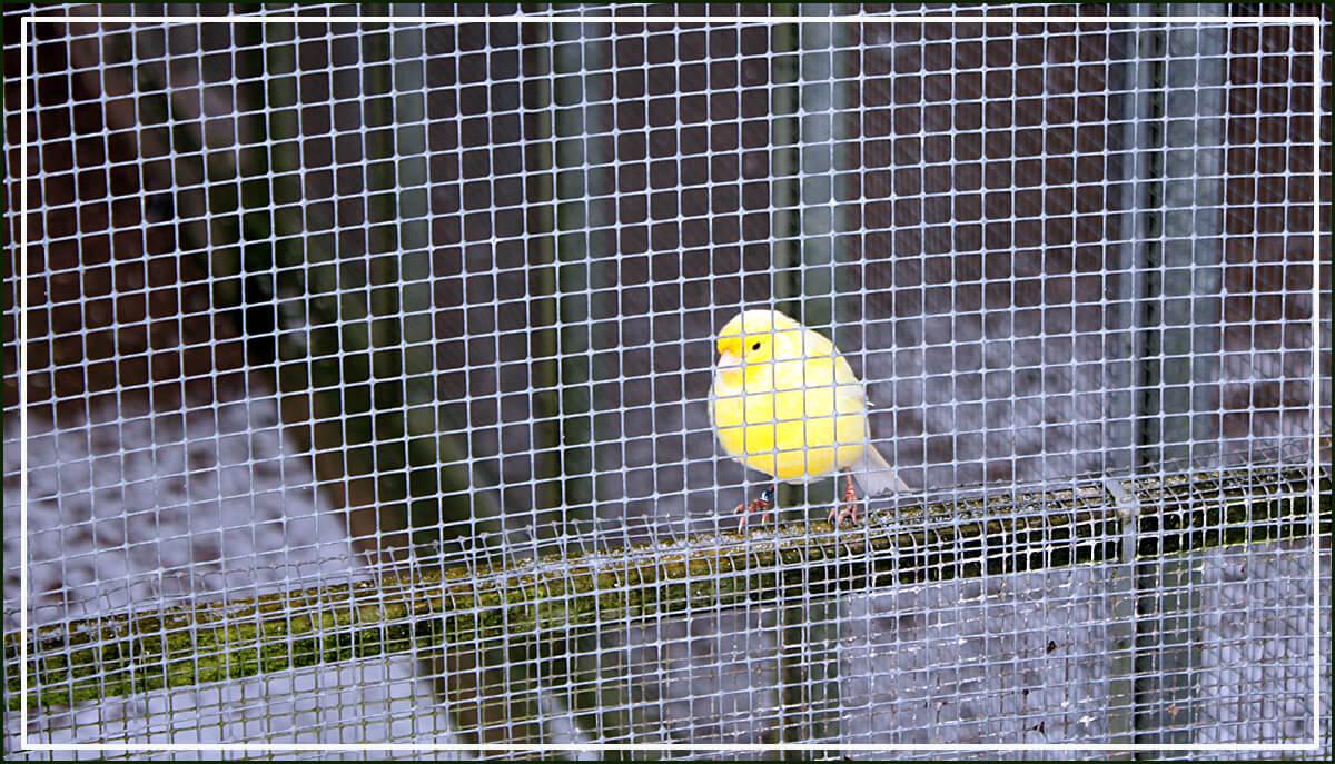 Vogel hinter Gittern